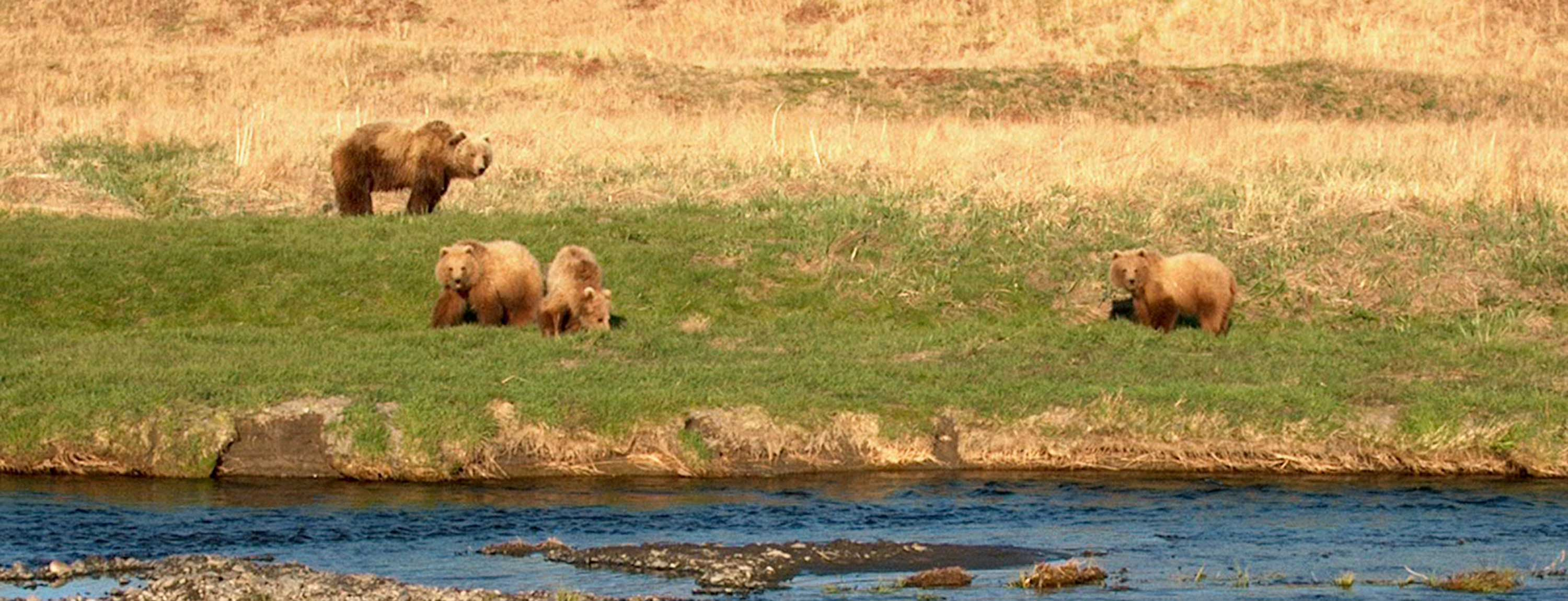 Brown Bears on the Kodiak Archipelago: Abundance and Resource Use