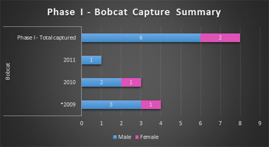 Bobcat capture summary
